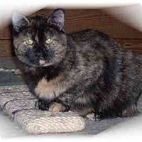 Adopt A Pet :: Patches - Montgomery, IL