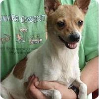 Adopt A Pet :: Rocket - Kingwood, TX