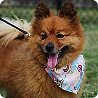 Adopt A Pet :: Spartacus - New Milford, CT