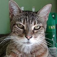 Adopt A Pet :: Sonnet - Palm City, FL