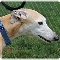 Adopt A Pet :: Breeze - Harrisburg, PA
