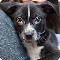 Adopt A Pet :: Wallace - Minneapolis, MN
