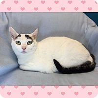 Adopt A Pet :: OLIVIA - Washington, NC