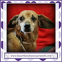 Adopt A Pet :: Clyde - Southport, FL