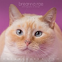 Domestic Shorthair Cat for adoption in Sheboygan, Wisconsin - Joan
