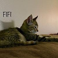 Adopt A Pet :: Fifi - Homewood, AL