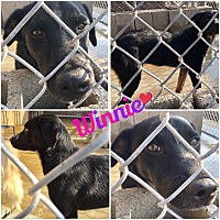 Adopt A Pet :: Winnie pending adoption - East Hartford, CT