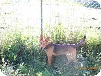 German Shepherd Dog Mix Dog for adoption in Bluffton, South Carolina - Mercedes