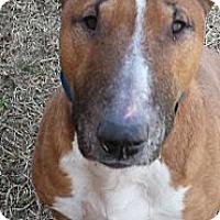 Adopt A Pet :: Sausage - Sachse, TX