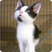 Adopt A Pet :: Mouse - Davis, CA