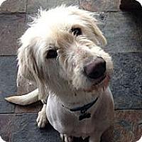 Adopt A Pet :: AR - Ivan - Boca Raton, FL
