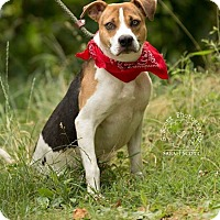 Adopt A Pet :: Archie - RESCUED! - Zanesville, OH