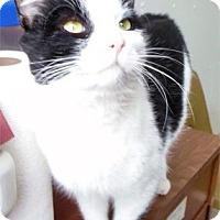 Adopt A Pet :: Prince - Waupaca, WI