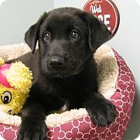 Adopt A Pet :: Eliza - South Dennis, MA