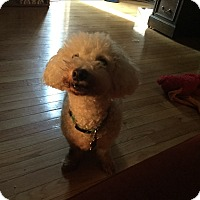Adopt A Pet :: Sparky (COURTESY POST) - Baltimore, MD