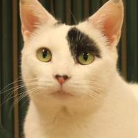 Adopt A Pet :: Bridget - Verona, WI