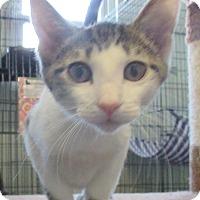 Adopt A Pet :: Mattea - Reeds Spring, MO