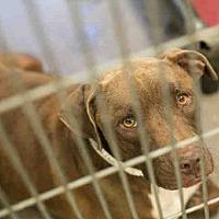 Adopt A Pet :: ROOTY - Phoenix, AZ