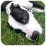 Photo 2 - American Staffordshire Terrier/American Bulldog Mix Dog for adoption in Mocksville, North Carolina - Geena
