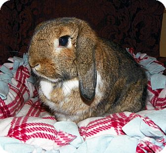 Lop-Eared Mix for adoption in North Gower, Ontario - Hazel