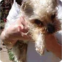 Adopt A Pet :: Forrest - Jenks, OK