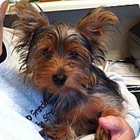 Adopt A Pet :: Maggie Mae - Skokie, IL
