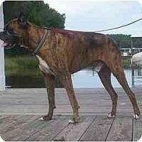 Adopt A Pet :: Atticus - Tallahassee, FL