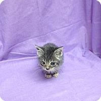 Adopt A Pet :: Augustus - Orlando, FL