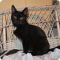 Adopt A Pet :: Perseus - Norwich, NY