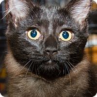 Adopt A Pet :: Sansa - Irvine, CA