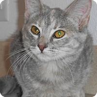 Adopt A Pet :: Marlow - North Highlands, CA