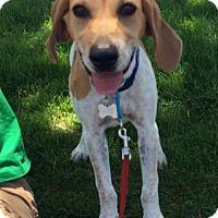 Adopt A Pet :: Jypsie - Albuquerque, NM