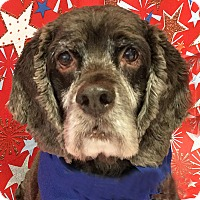 Adopt A Pet :: Tobie - Newington, VA