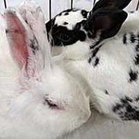 Adopt A Pet :: Sparkle - Tustin, CA