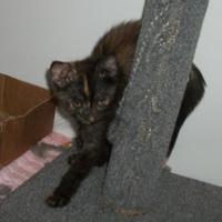 Adopt A Pet :: Jess - Clinton, MO