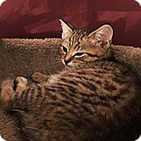 Adopt A Pet :: Peanut - N. Billerica, MA
