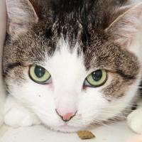Adopt A Pet :: LARA - Camarillo, CA