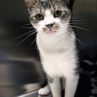 Adopt A Pet :: Spunky - Paris, ME