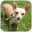 Photo 1 - Chihuahua Dog for adoption in San Clemente, California - BOBBY