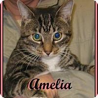 Adopt A Pet :: Amelia - Galloway, NJ