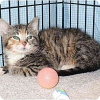 Adopt A Pet :: Holle Berry - Colmar, PA