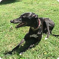 Adopt A Pet :: Ritz - Lexington, SC
