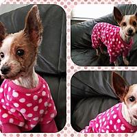Adopt A Pet :: Katrina - DOVER, OH