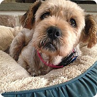 Adopt A Pet :: Lucinda: loves Car Rides! - Madison, WI