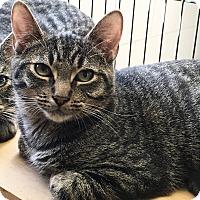 Adopt A Pet :: Ben - East Brunswick, NJ