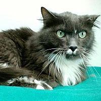 Adopt A Pet :: Kallie - Denver, CO