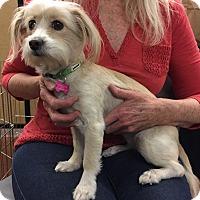 Adopt A Pet :: Pricilla - Encino, CA