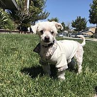Adopt A Pet :: Monyo - Whittier, CA