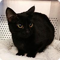 Adopt A Pet :: Misha - Sarasota, FL
