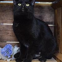 Adopt A Pet :: Triss - Germantown, MD